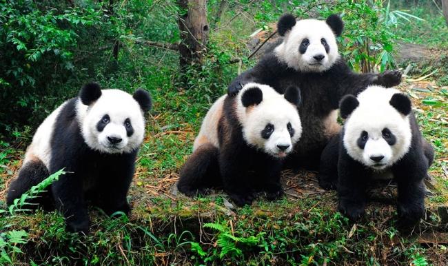 VIAJES A CHINA, CUIDANDO AL OSO PANDA - Beijing / Hangzhou / Shanghai / Suzhou / Xian /  - Buteler en China